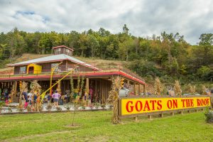Goats on the Roof, Things To Do in Pigeon Forge, Things to Do in Wears Valley, Goats On The Roof Pigeon Forge, Goat on the Roof Wears Valley, Wears Valley Shopping, Pigeon Forge Shopping, Wears Valley Tennessee,